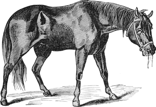 ADR - Horse Side Vet Guide - Equine Health Resource - 5 Star Mobile App & Free Website
