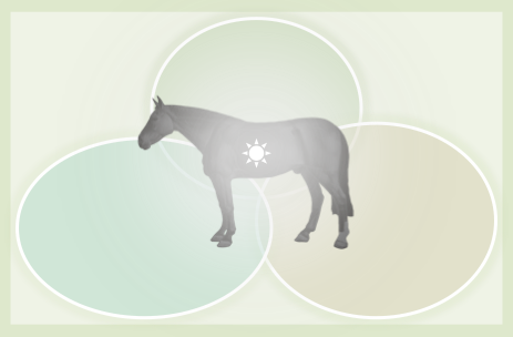 Horse inside a venn diagram