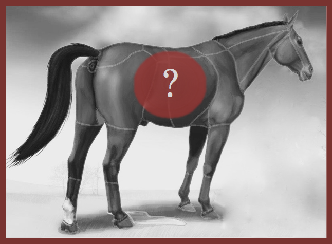 Male Equine Model BW with Question Mark