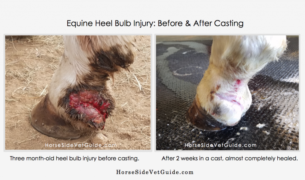 equine-heel-bulb-injury-before-and-after-casting