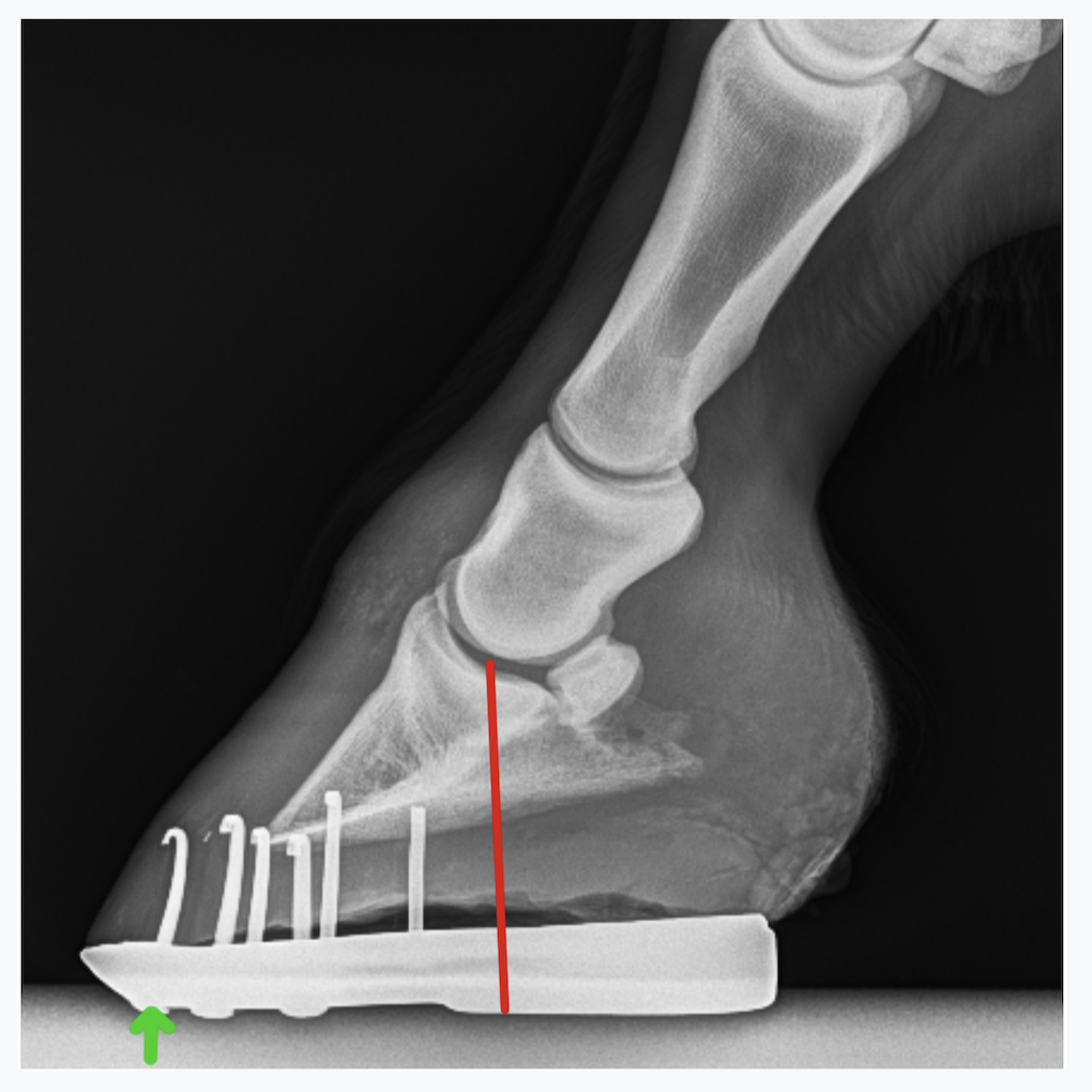 A side (lateral) view of the lower limb is very important to assess hoof/pastern angle and shoeing. This one shows that the shoe is placed further forward than might be ideal.