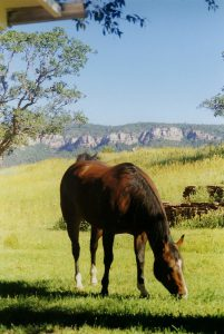 Old horse euthanasia article